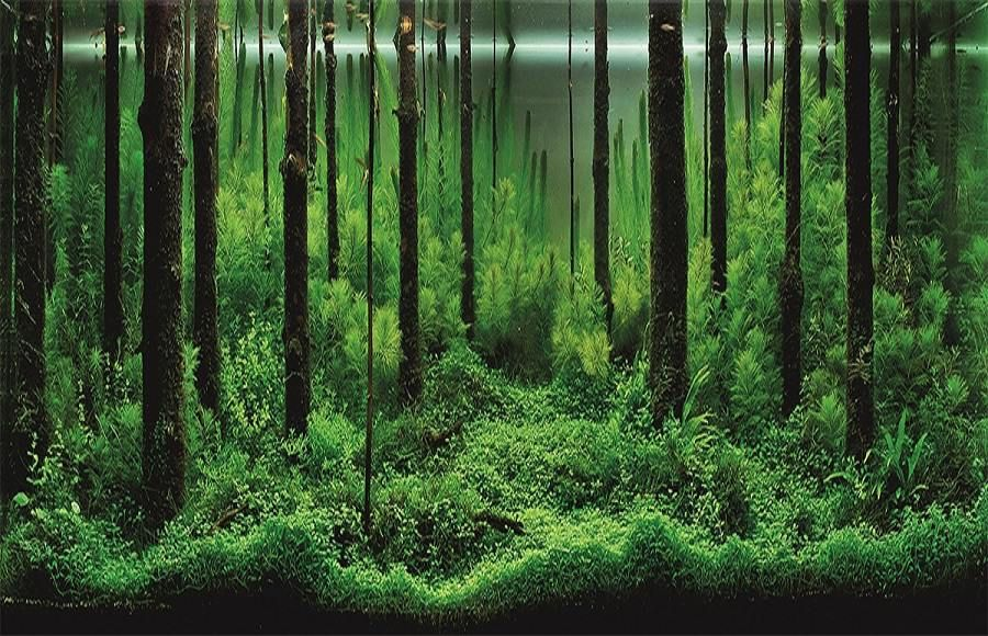 Aquascape Ideas Forest Aquascape