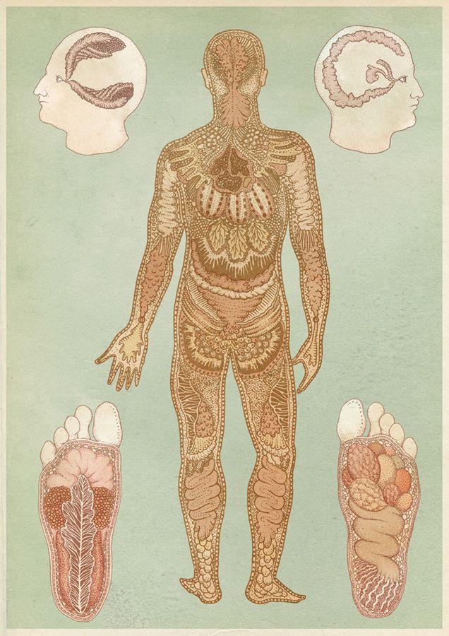 cuerpo | Ilustración | Pinterest | Anatomía, Cuerpo y Ilustracion ...