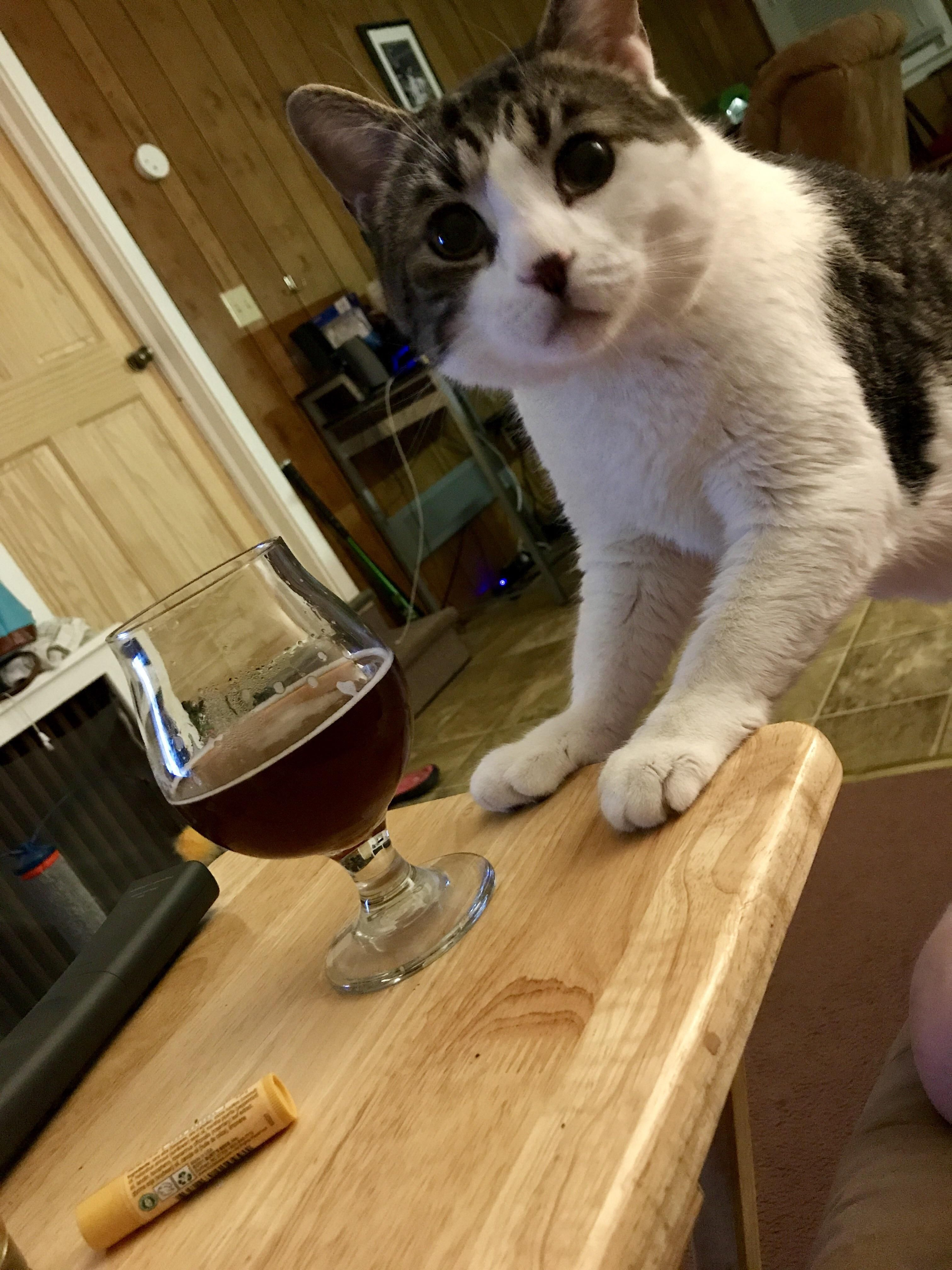 Is this catnip flavored? http://ift.tt/2ulqX95