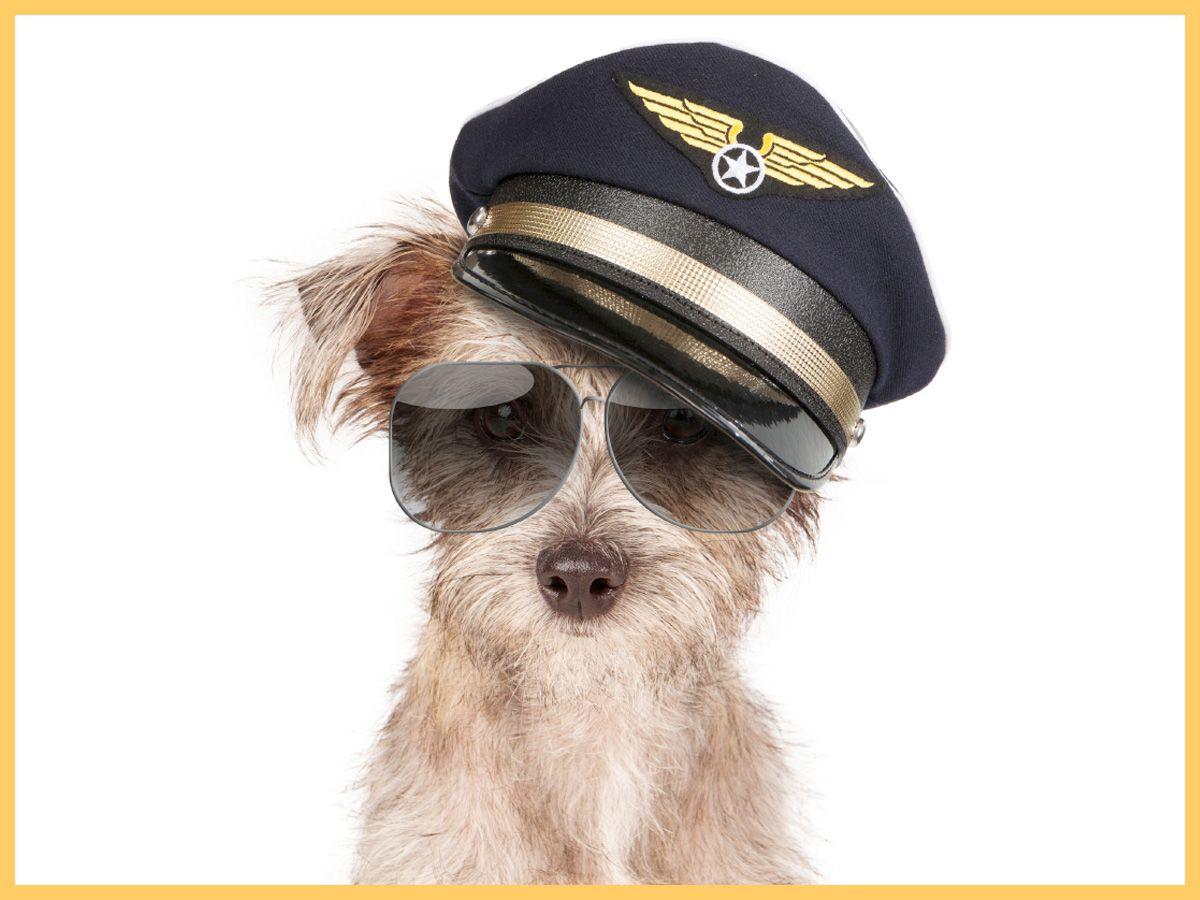 Most airlines will allow you to travel with your pet! Has your dog or cat had the chance to take a plane before?   /// Il est autorisé, dans la plupart des compagnies aériennes, de voyager avec son animal de compagnie! Votre chien ou votre chat a-t-il déjà eu la chance de prendre l'avion?