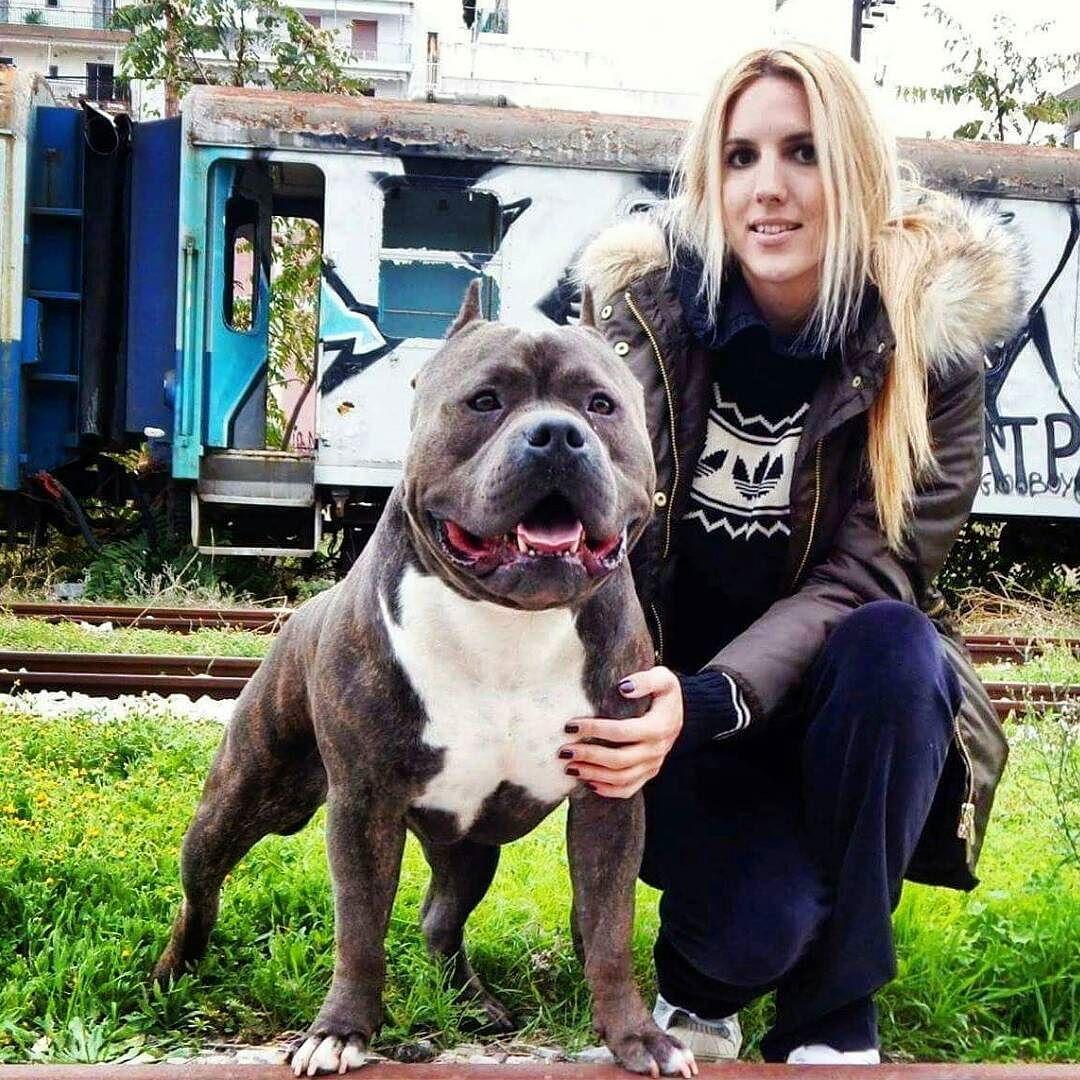 American Bully On Instagram Americanbully Bullybreed Bullyz Badass Dogs Animals Pitbull Pitsofinstagram Instad American Bully Bully Dog Girl And Dog