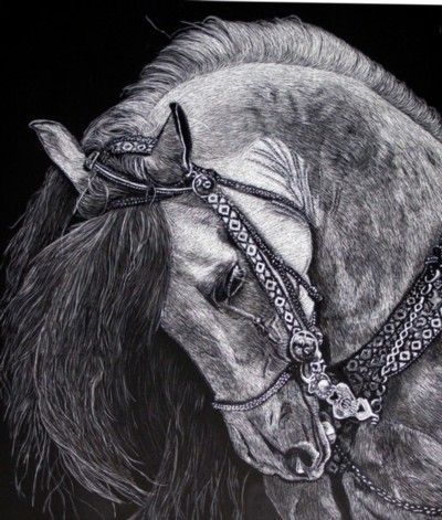 horse scratchboard art | colors - black and white 5 - animals ...