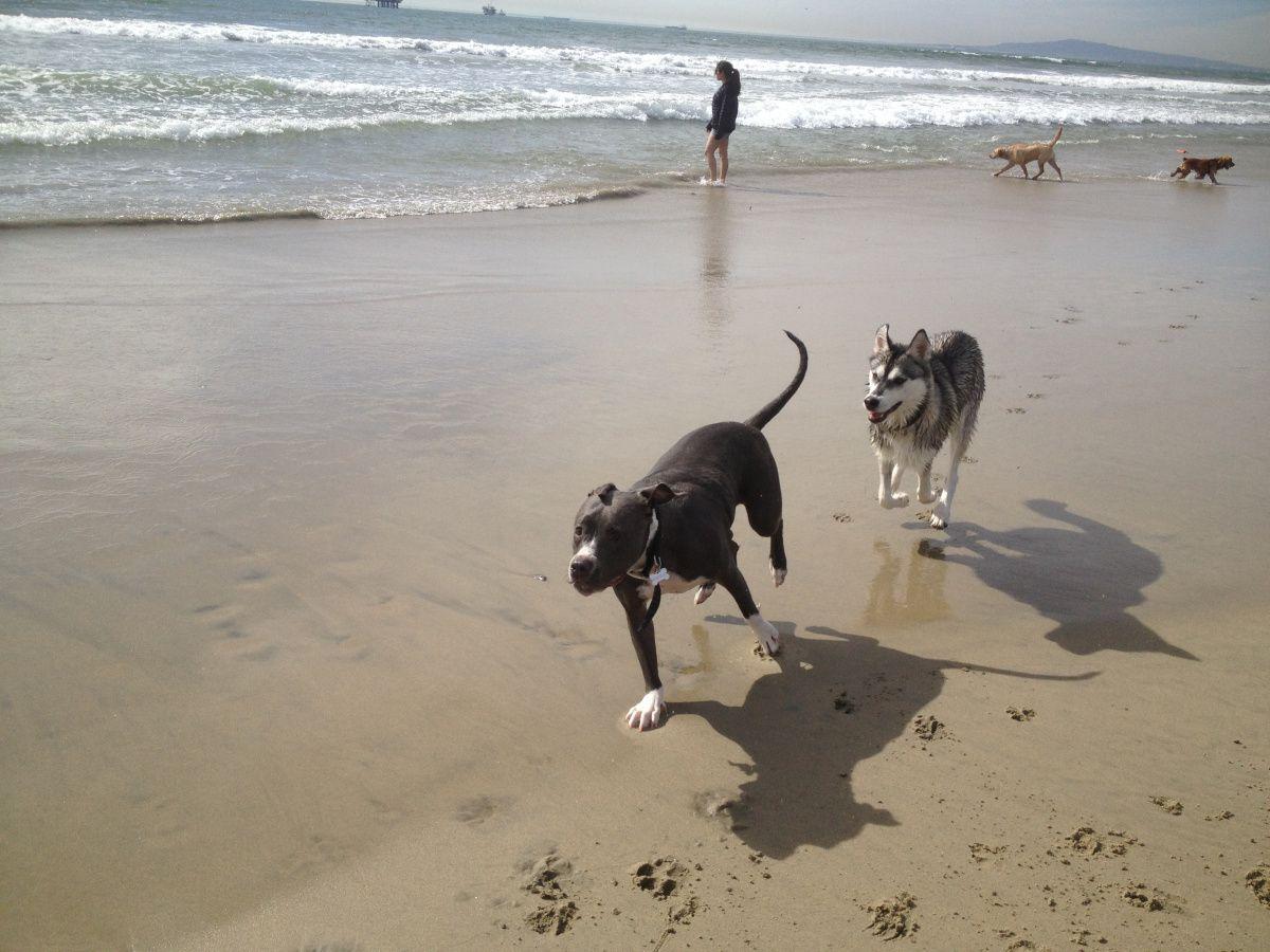 Dog Friendly Beaches in Orange County Dog friendly beach