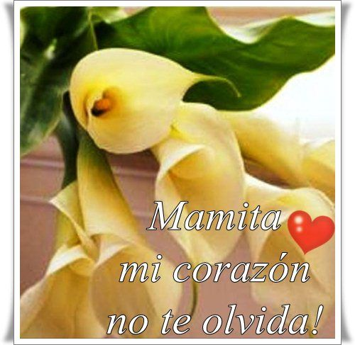 "Pensamiento a La Madre Fallecida Poemas+para+madres+fallecidas A MI MADRE""OLIVIA OSORIO"
