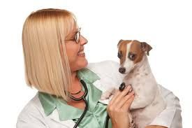 Animals Helpline : Veterinarian In Bhilai
