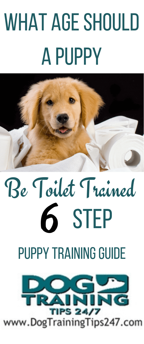 What Age Should a Puppy Be Toilet Trained Puppy Training