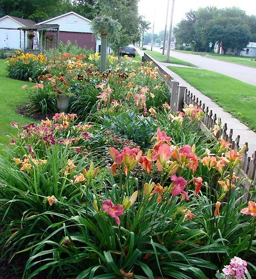 Lovely 20 Cottage Style Landscaping Ideas To Enhance Your: Daylilies. What A Workhorse These Flowers Are. They Just