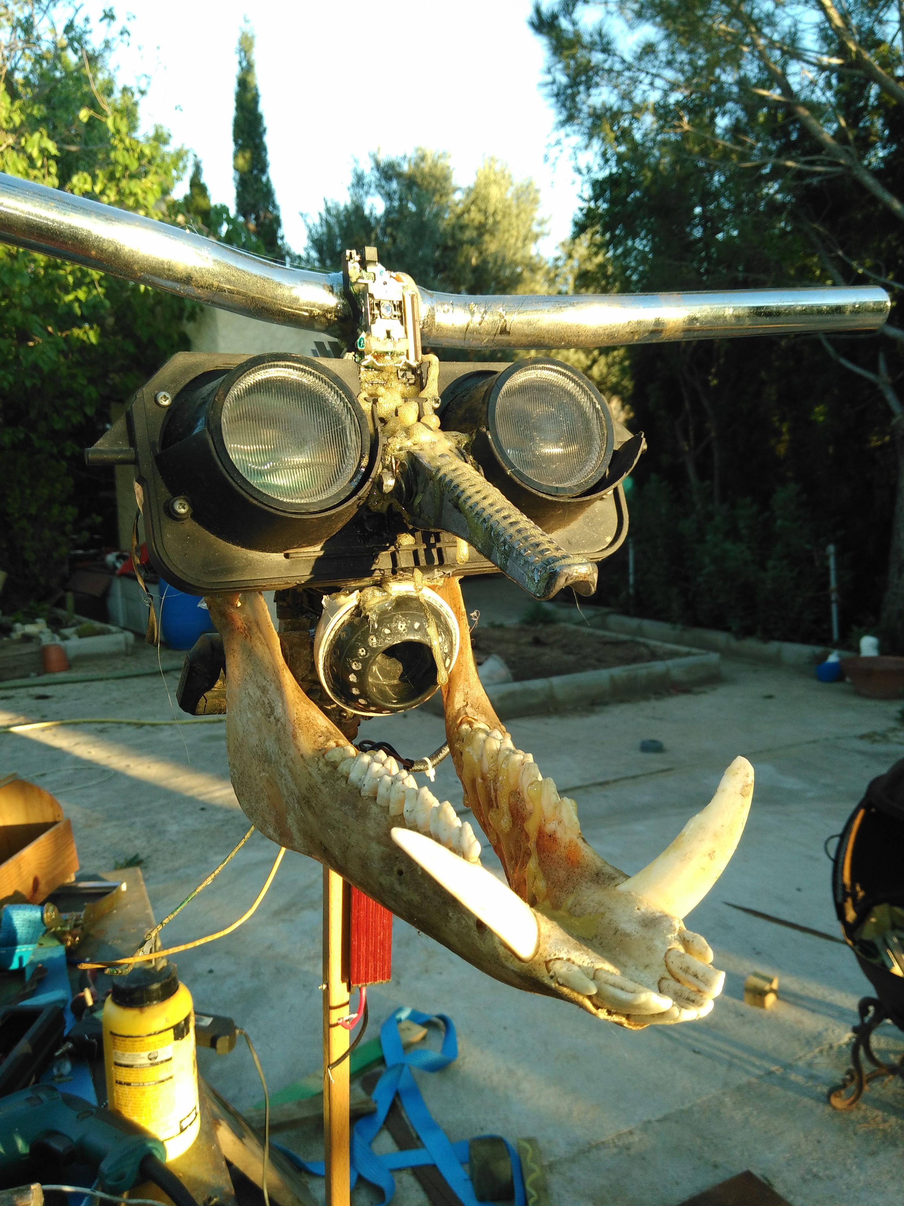 aberrante animal hecho con mandibula de jabali ojos de faro de moto manillar etc