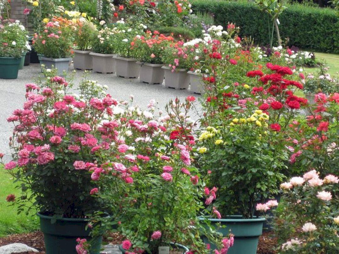 24 Small Rose Garden Design Ideas for Home Yard More ...