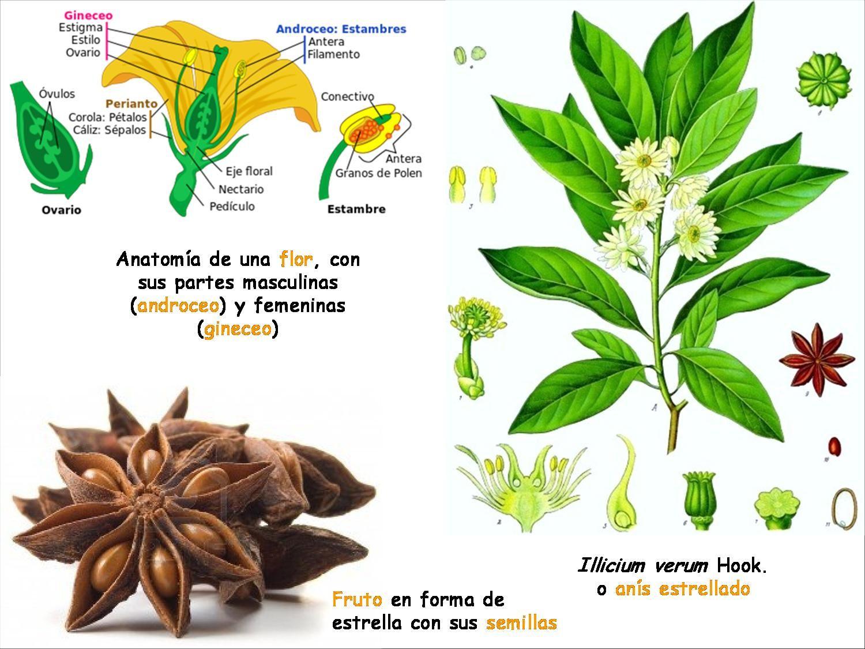 Moderno Anatomía De Planta De Flores Colección de Imágenes ...