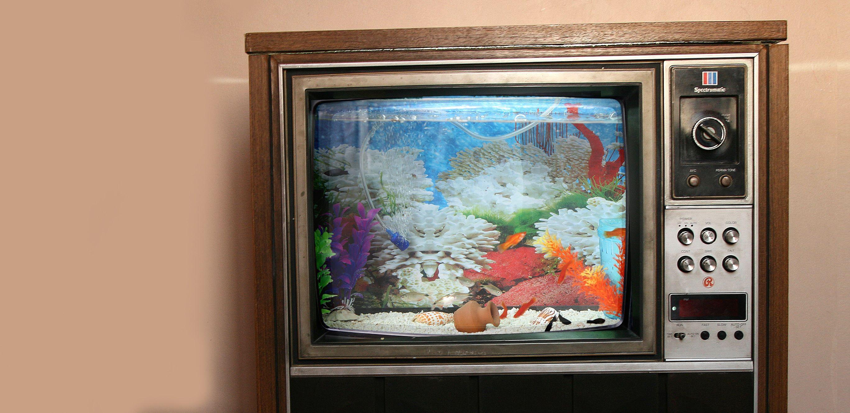 18 magnificent aquarium designs for your home home