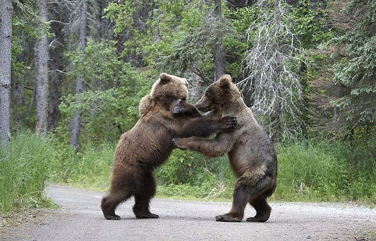 Design You Trust. Design and Beyond. Bear, Battle bears