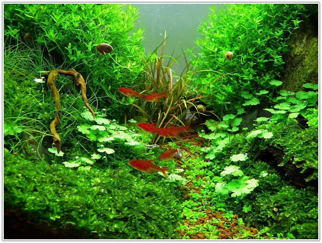 Lovely Aquascape Plants   Bing Images