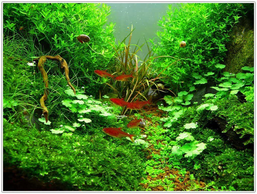 Attractive Aquascaping Plants Design