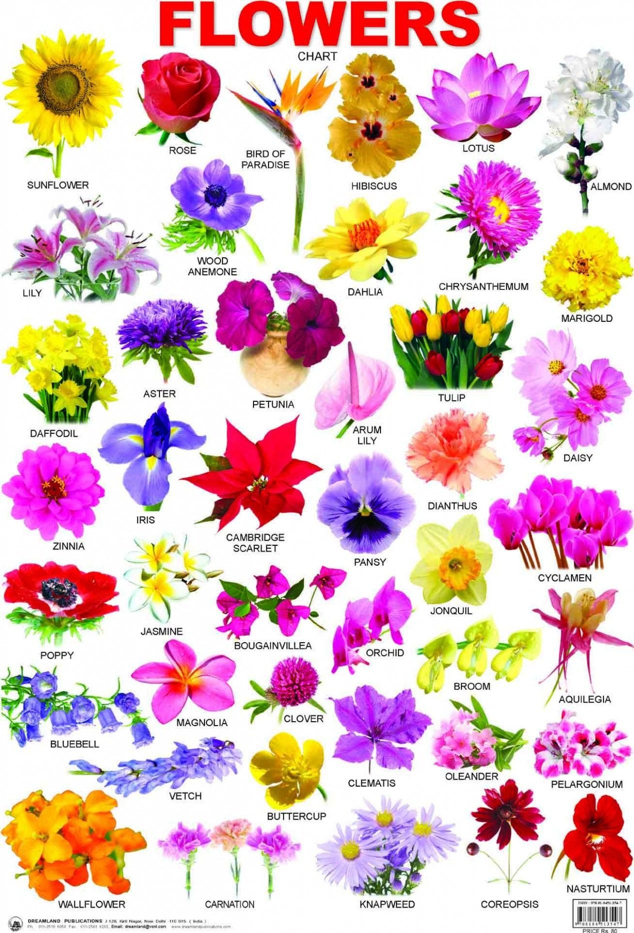 You Will Never Believe These Bizarre Truth Behind Pictures Of Flowers With Names Pictures Of Flowers All Flowers Name Indian Flower Names Flower Types Chart