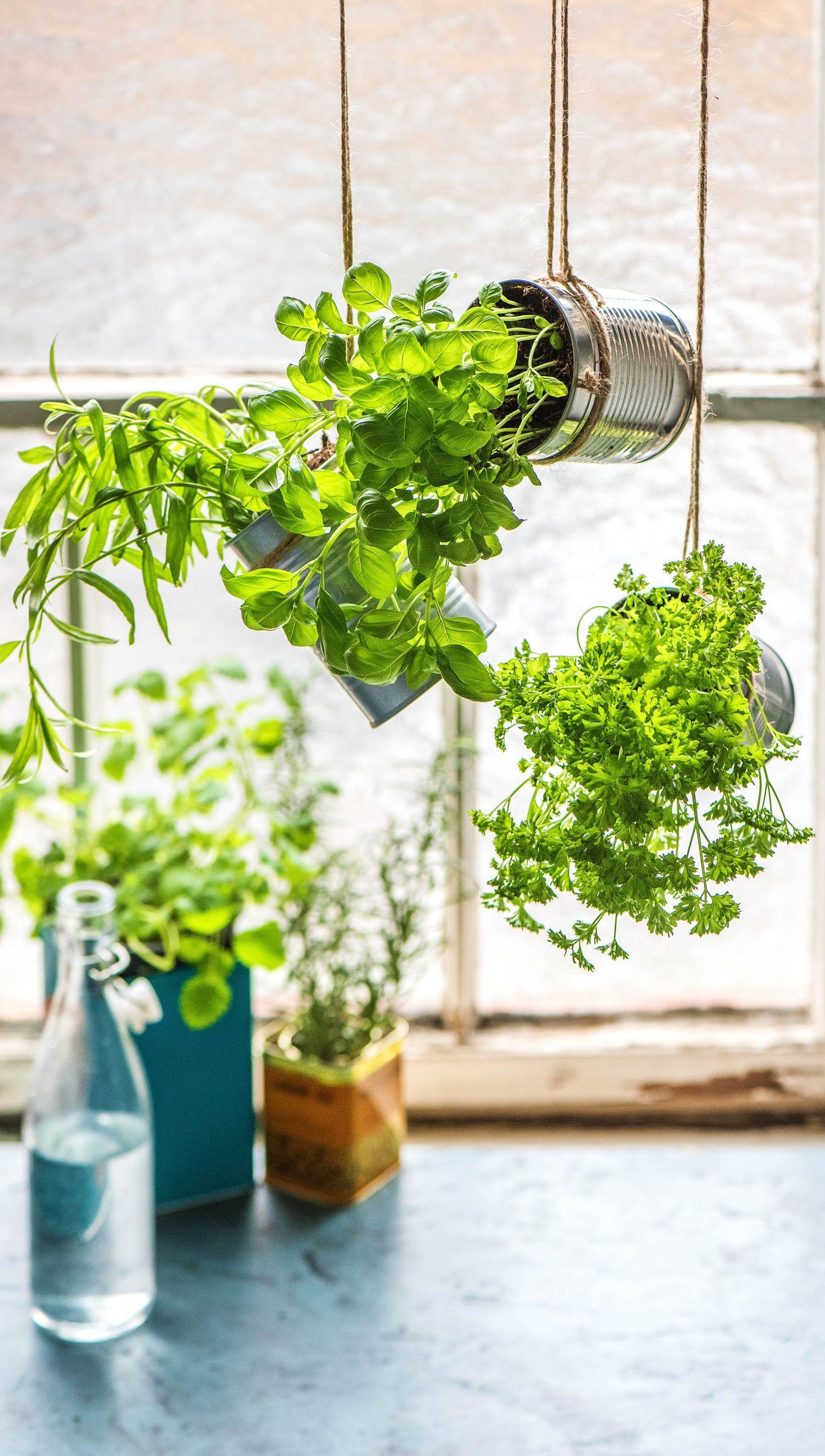 Selbstgemachter Kräutergarten Küche | Einfach selber machen ...