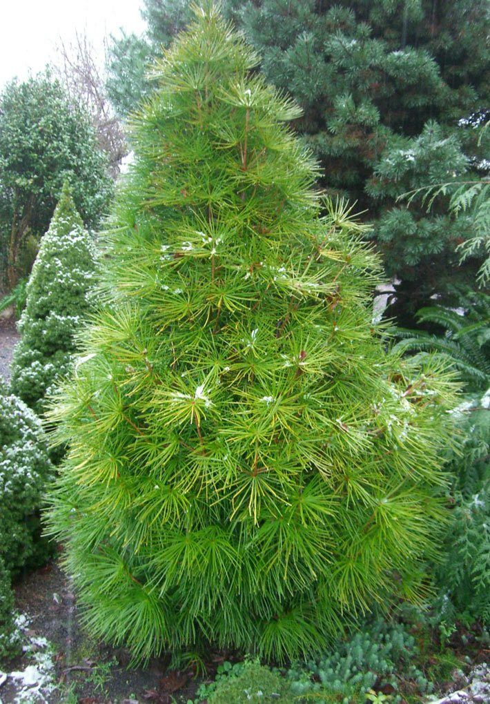 Trees For Small Spaces Dwarf Trees For Landscaping 400 x 300