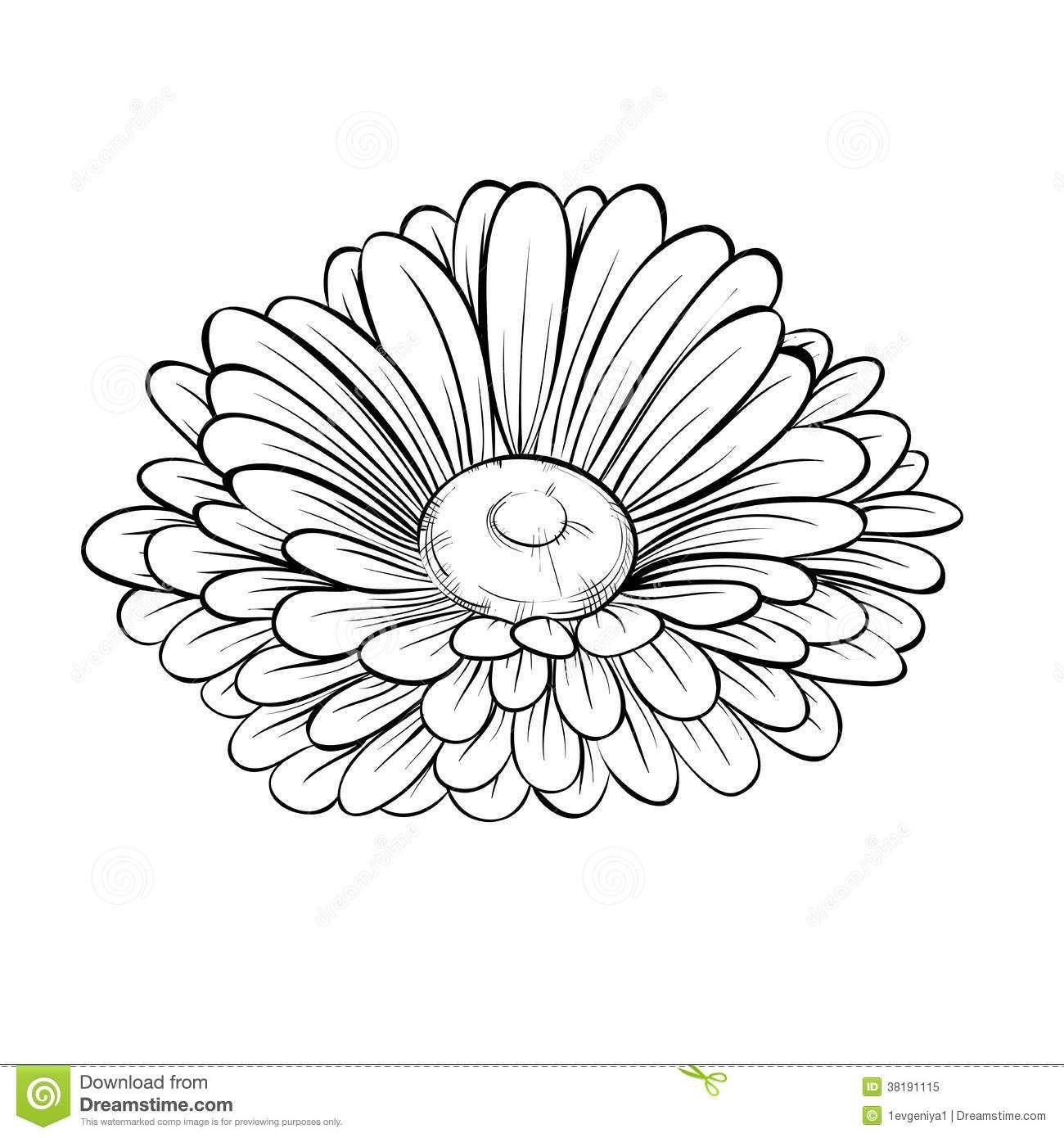Gerber Daisy Drawing Google Search Flower Drawing Flower Outline Poppy Flower Drawing