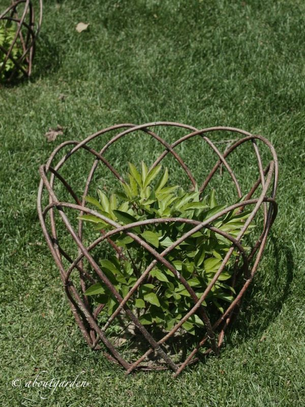 Photo of Plant supports#plant #supports