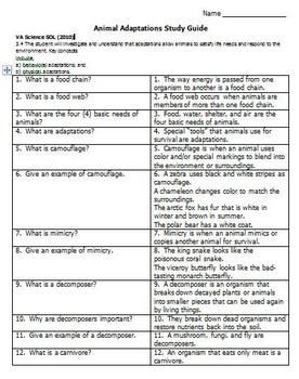 The birds study guide answers