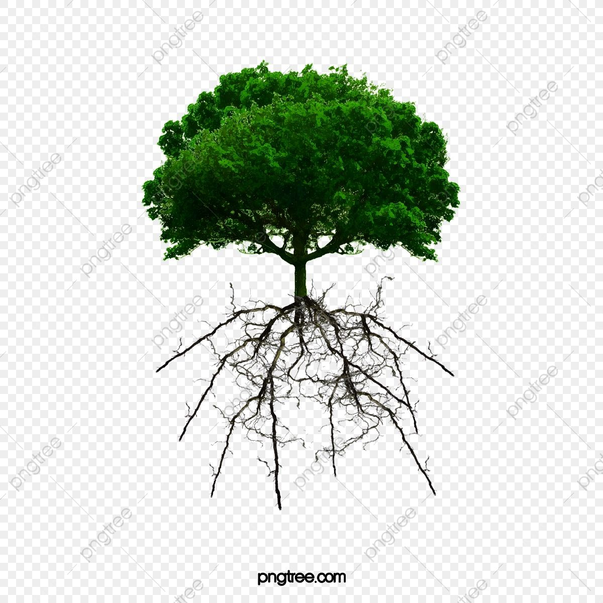 Tree Roots Tree Clipart Trees Root Png Transparent Clipart Image And Psd File For Free Download Tree Roots Tree Clipart Cartoon Trees