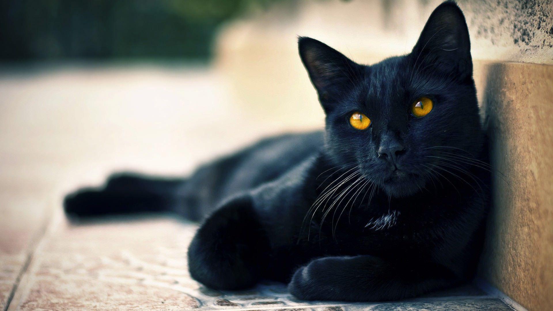 Black Cat 1920 1080 Cat care, Cat wallpaper, Cats