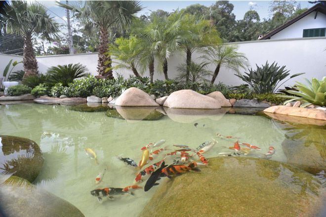 Lagos ornamentais pesquisa google ornamental lake for Lagos de jardin