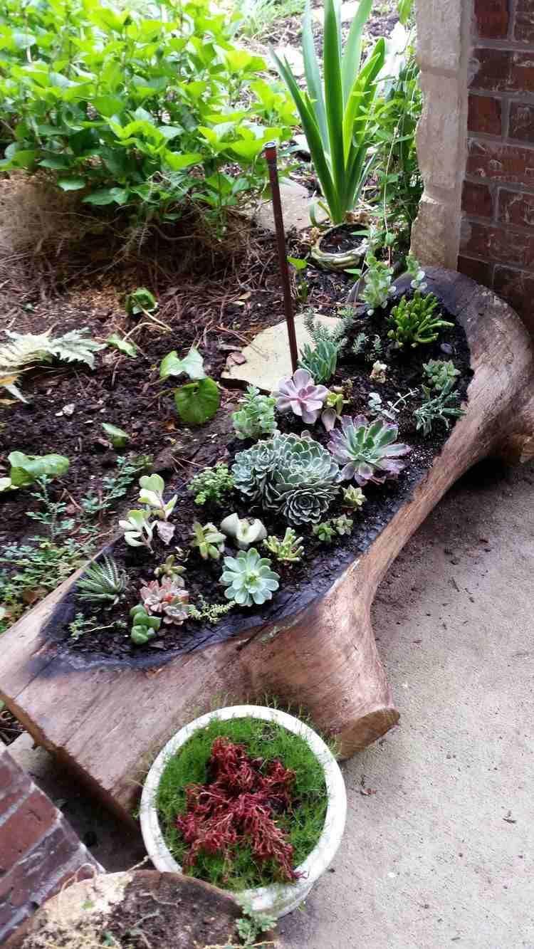 D Co Bois Flott Plantes Succulentes La Nature S 39 Invite Chez Vous D Co Bois Flott Deco