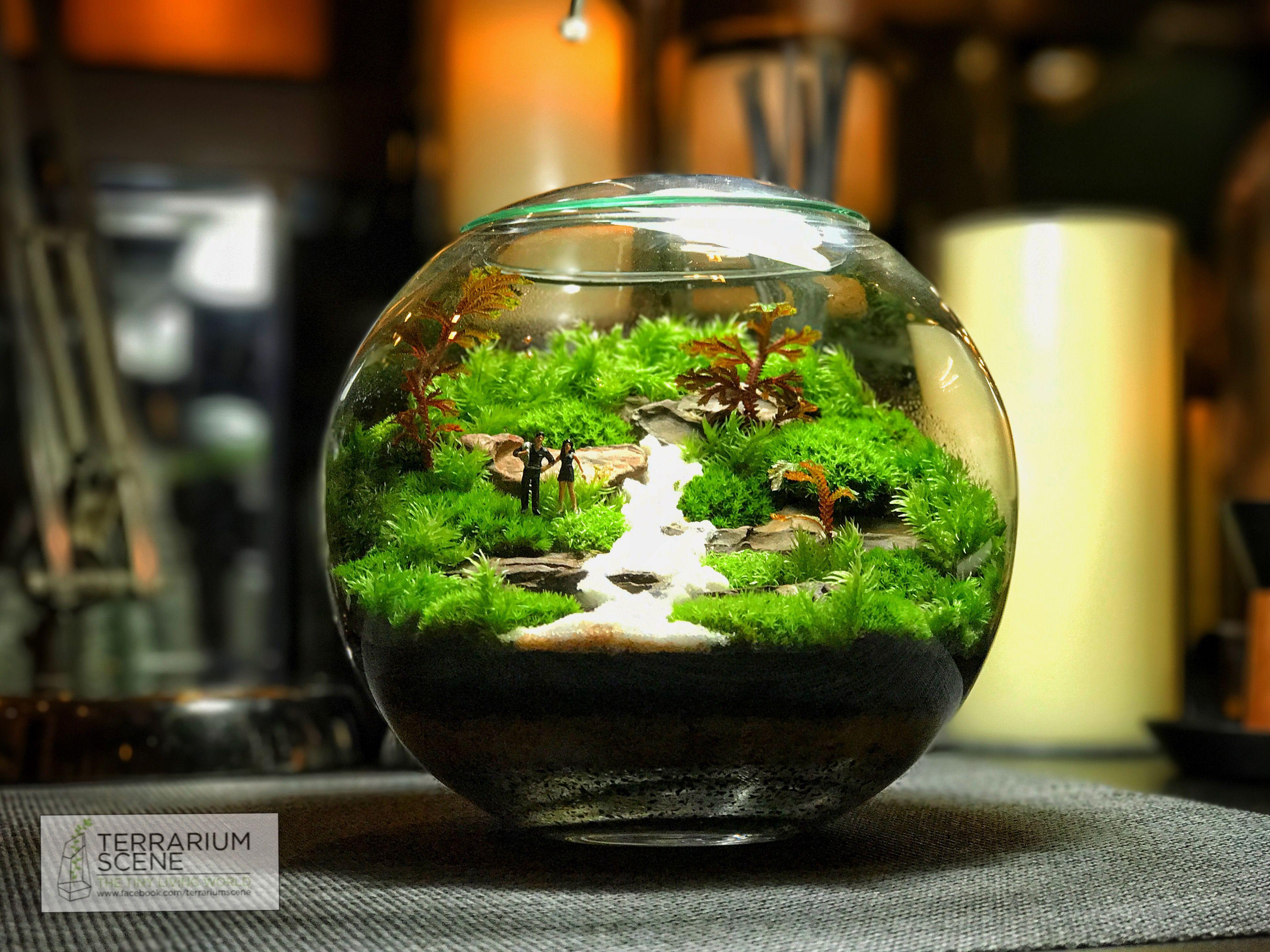 Terrarium Scene, Fairy Terrarium, Terrarium Ideas, Dish Garden, Indoor Garden,