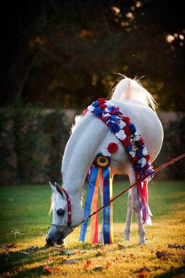 Arabian Horse Arabian Horse Horses Arabian Horse Costume