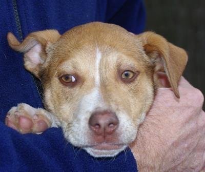 Animal Profile Delta Losing A Dog Animals Delta