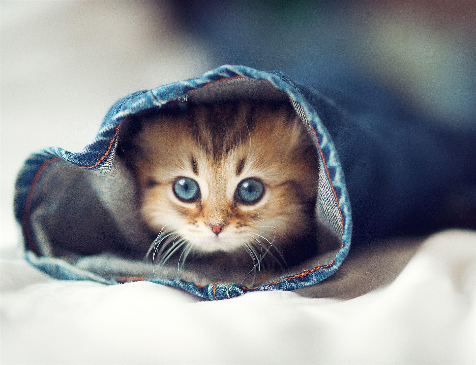 Cat Jeans The Bed Eyes Kitten Halosha Kittens Cutest Cute Animals