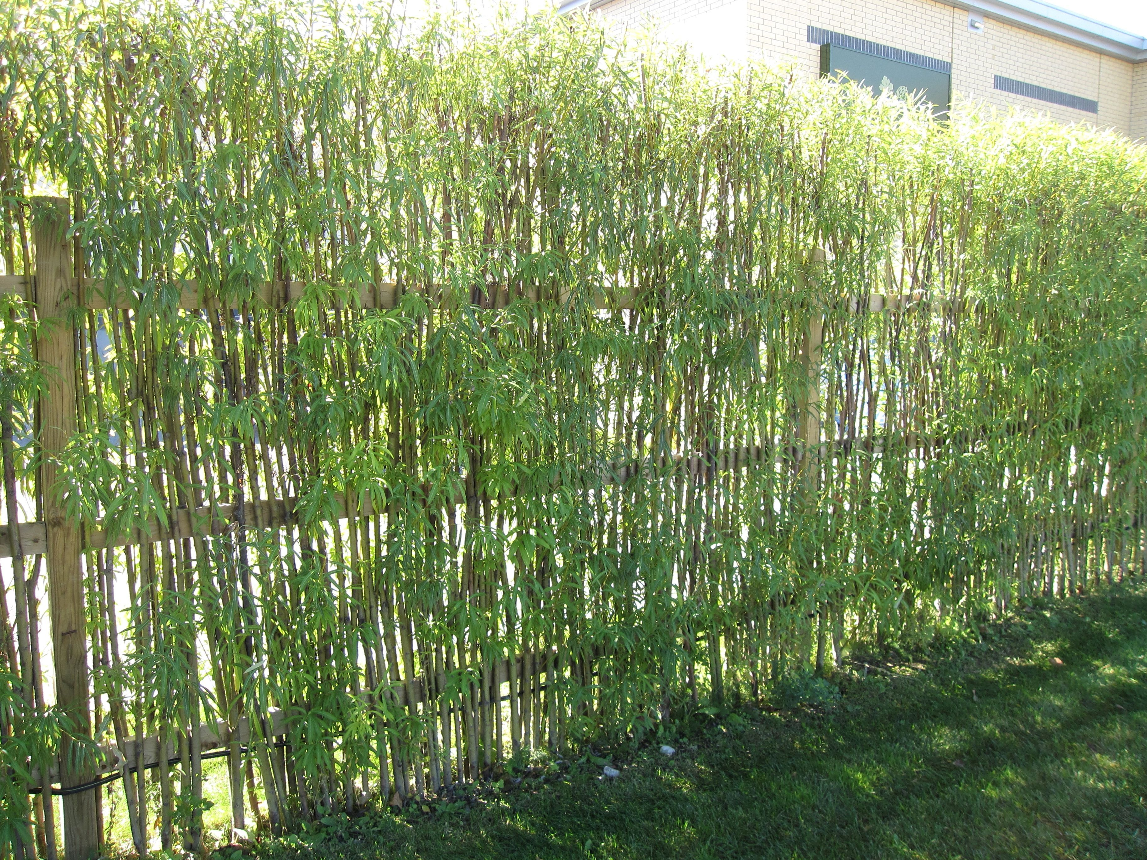 Bamboo Fencing Design Ideas For Your Inspiration Natural Small