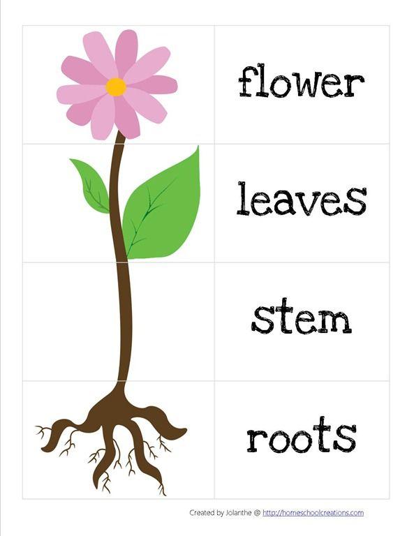 Parts Of A Flower 3 Jpg Image Ciclos De Vida De Las Plantas Ingles Para Preescolar Centros De Aprendizaje