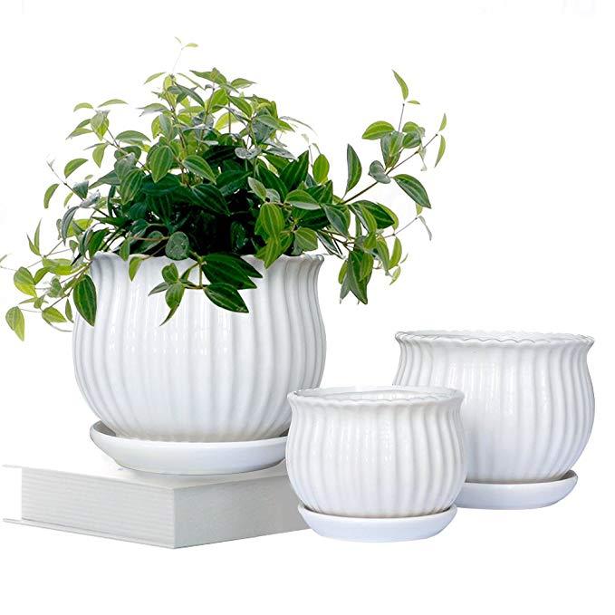 Amazon Com Gelive Set Of 3 White Ceramic Flower Pots Succulent Planters Garden Plant Contai In 2020 Ceramic Flower Pots Ceramic Succulent Planter Succulent Planter