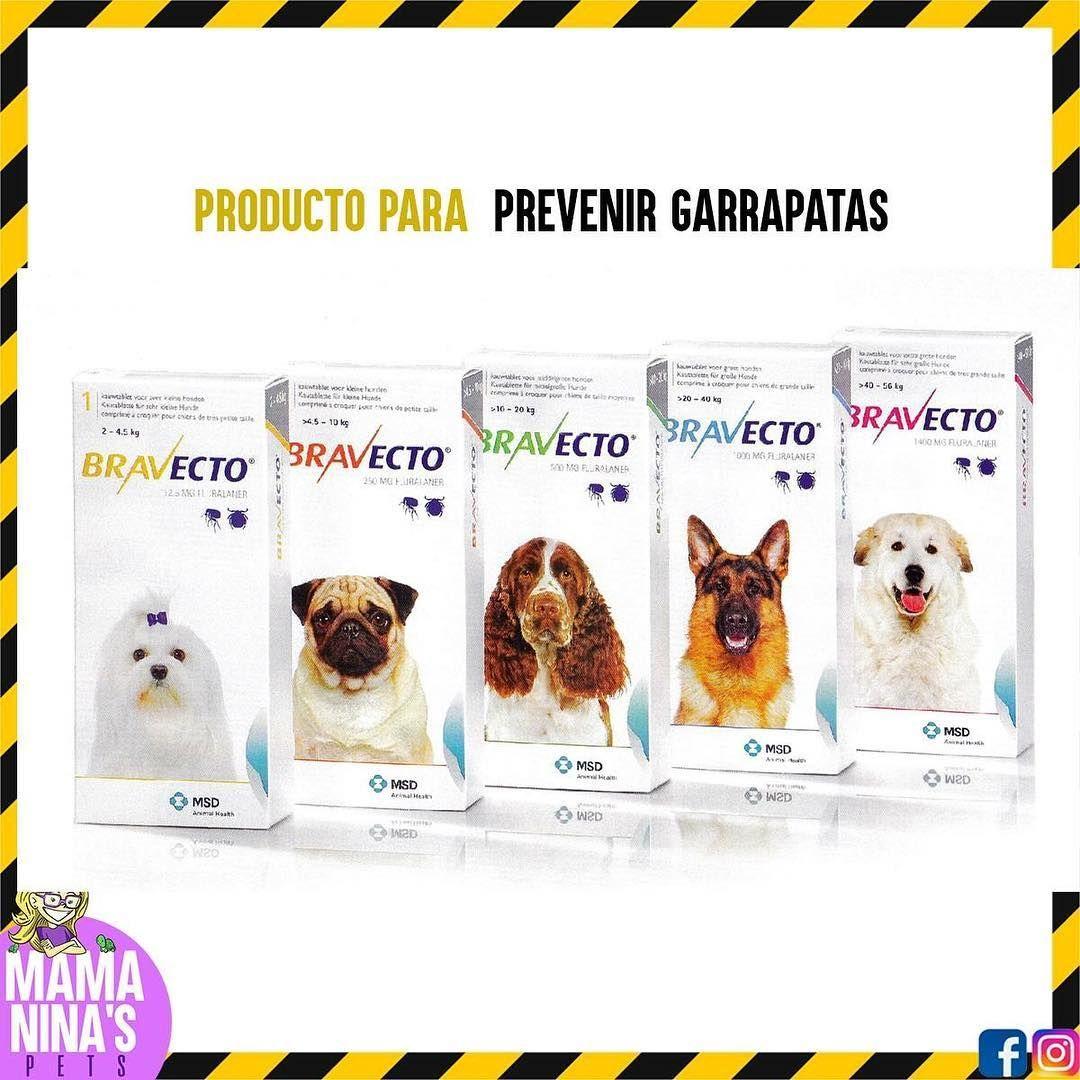 Continuemos nuestra lucha contra la Ehrlichiosis Canina