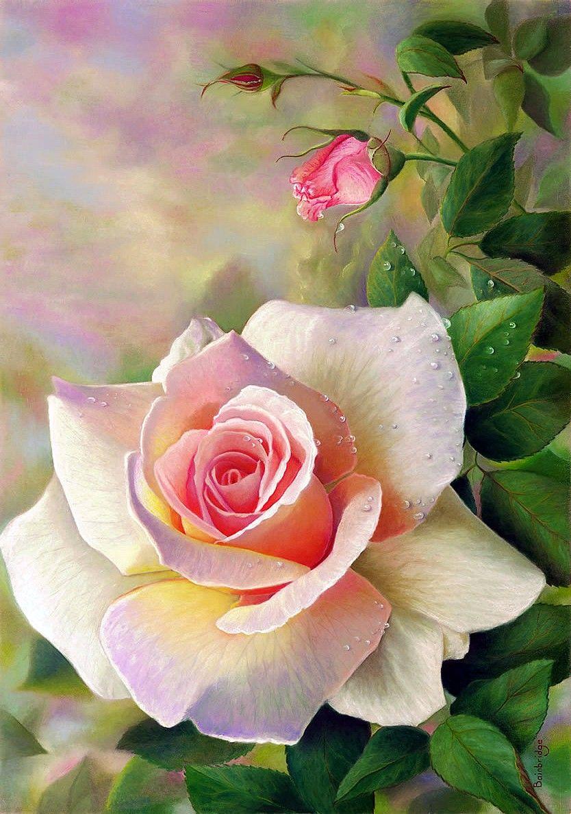 Roses Painting Flower Art Flowers Watercolor Flowers