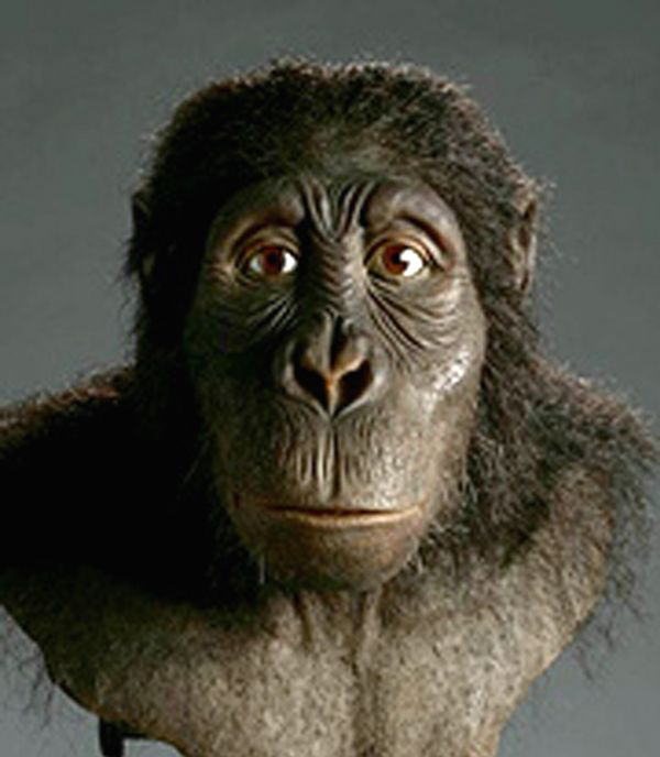 maturation of australopithecus  maturation periods, increased social cooperation and tool making  the genus  australopithecus, between 3 million and 4 million years ago,.