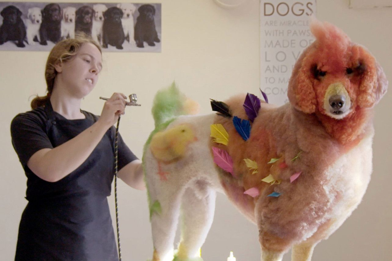 Hbo Sports Acquires Competitive Dog Grooming Documentary Well