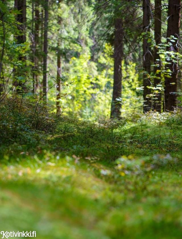 Ilmaista terapiaa: ota kaikki irti kesäisestä luonnosta, kokosimme yhdeksän vinkkiä saat voimaa luonnosta.