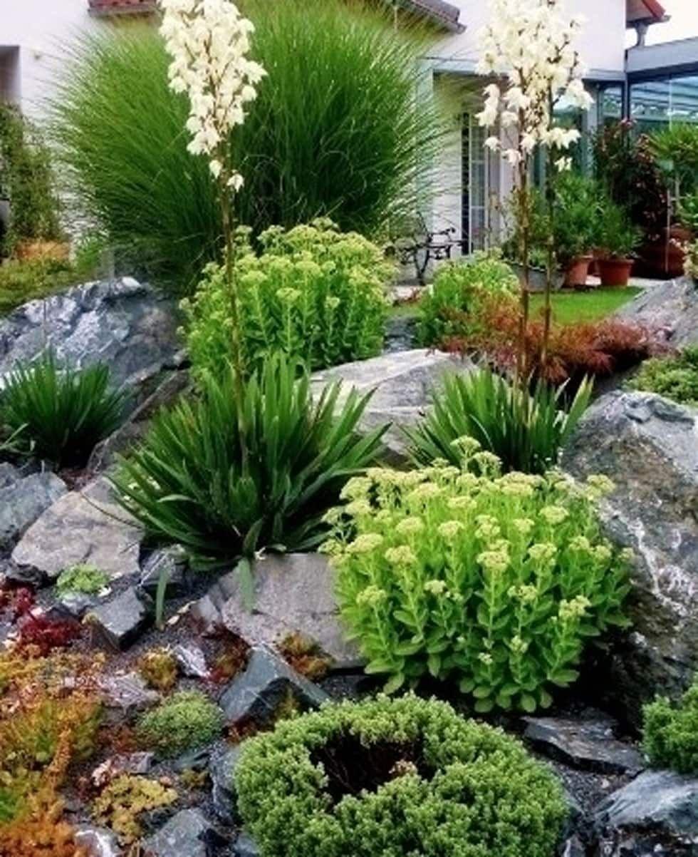 Mediterraner Garten Bilder Pflanzung Findlinge