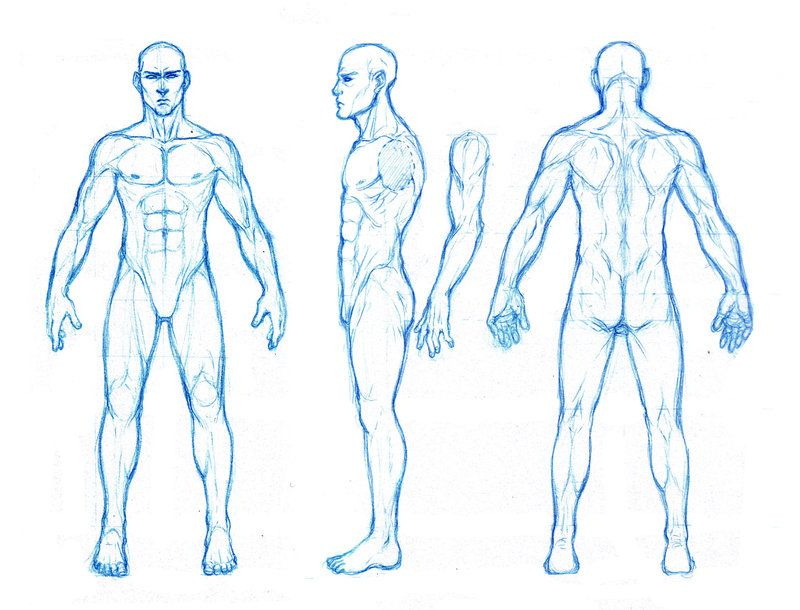male anatomy drawing - Google Search | Character model sheets ...
