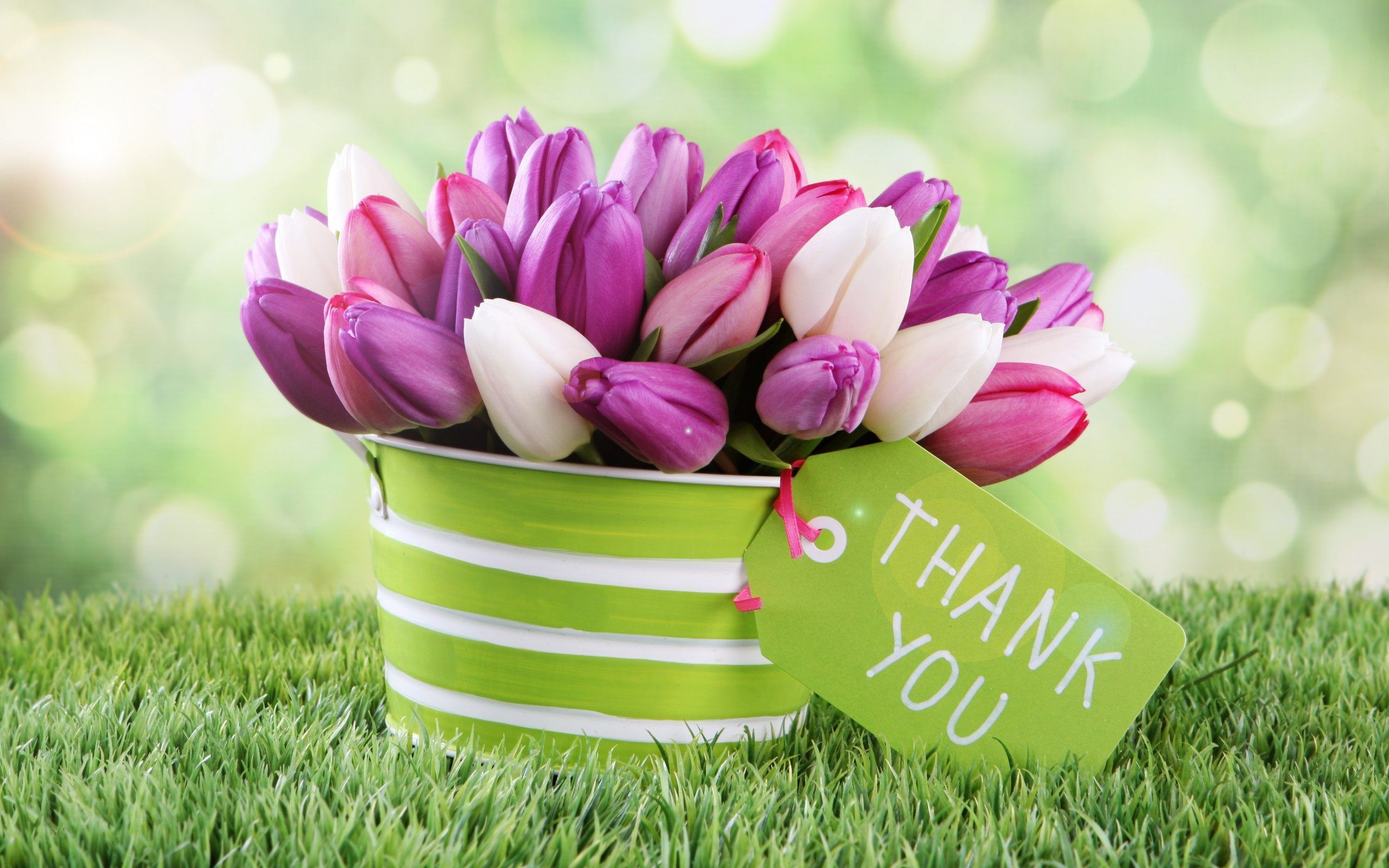 Images Of Thank You Flowers Wallpaper Background With High Resolution 2560x1600 Px 428 71 Kb Lovely Flowers Wallpaper Thank You Flowers Flower Wallpaper