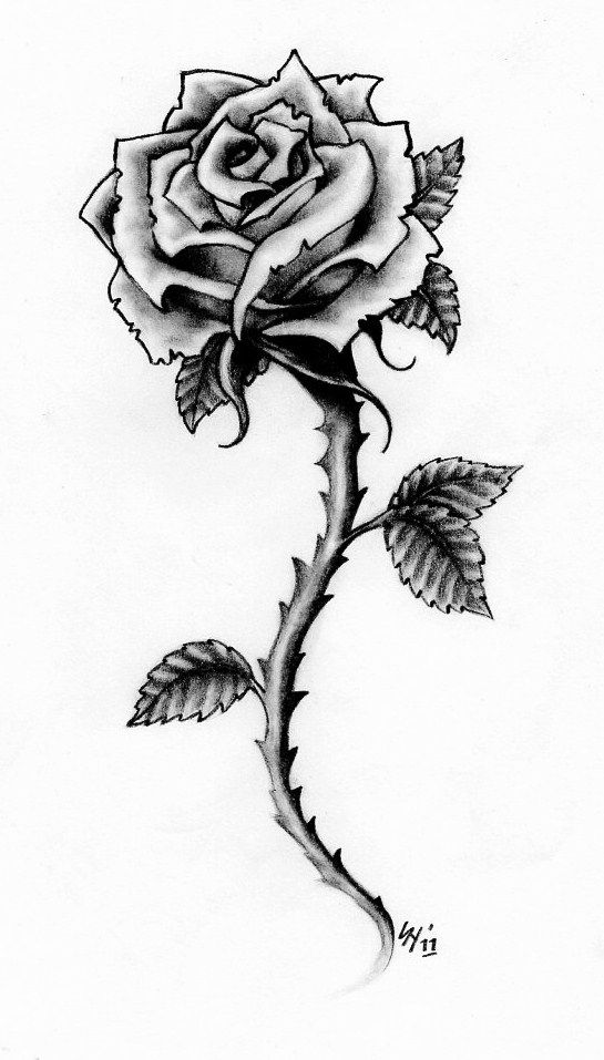 Rose Tattoo Design By Hamdoggz On Deviantart Rose Drawing Tattoo Rose Tattoo Stencil Rose Tattoo Design
