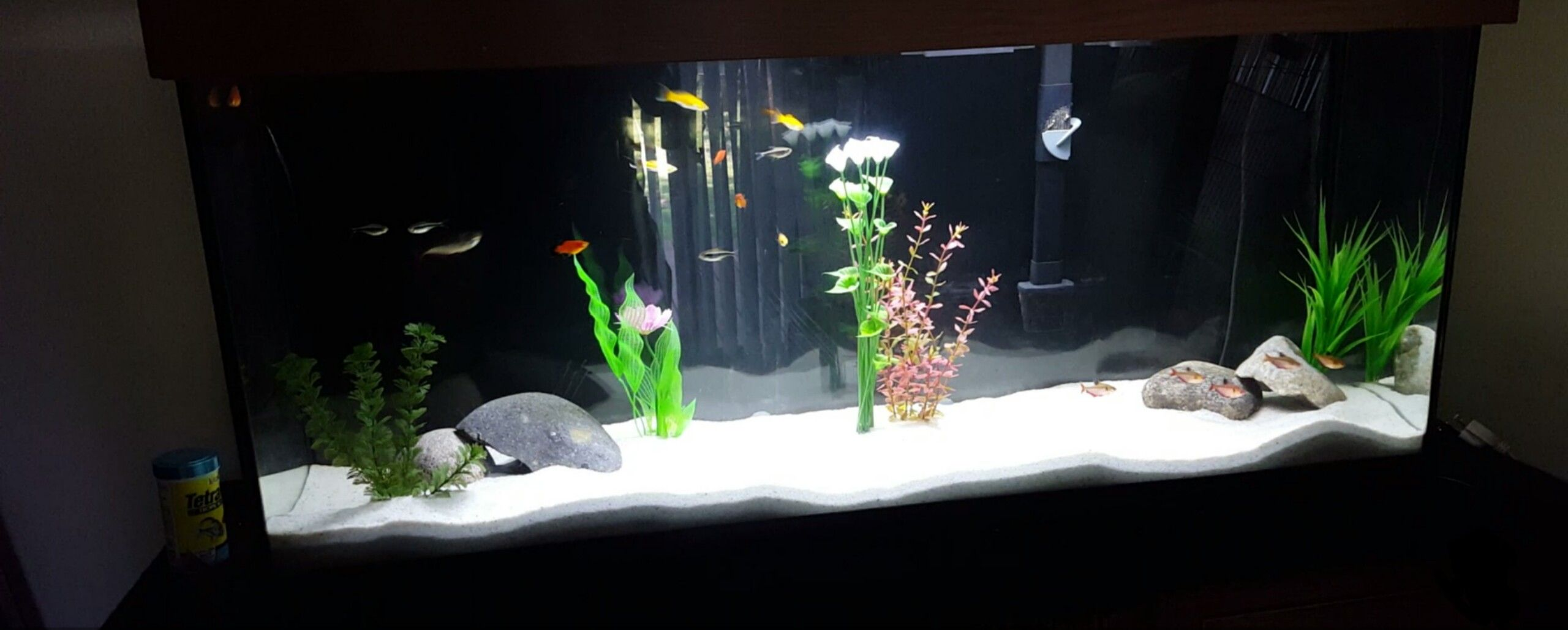 Fish to have in your aquarium - If You Didn T Know You Can Add Pool Filter Sand To Your Aquarium
