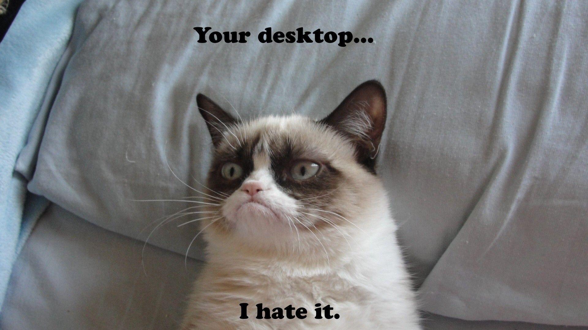 Cat Wallpapers In 2020 Funny Cat Memes Grumpy Cat Meme Cat Memes