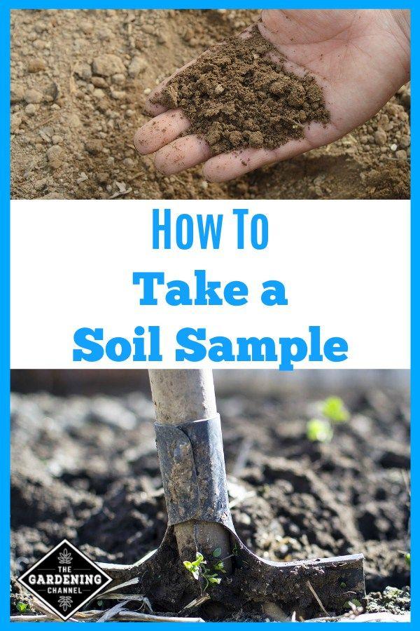 How To Take a Soil Sample Garden soil, Soil, Soil