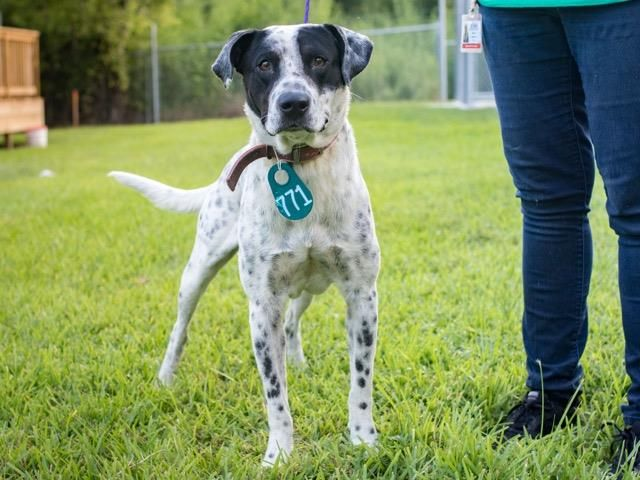 Sarge Id A468590 Urgent Harris County Animal Shelter In Houston Texas Adopt Or Foster I Have A Possible Adopter Male D Animal Shelter Animals Pets