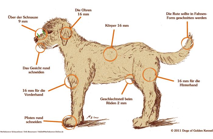 Haartypen Coat Type Goldendoodle Dogs Of Golden Kennel Andreas Werner Labradoodle Welpen Portugiesischer Wasserhund Labradoodle