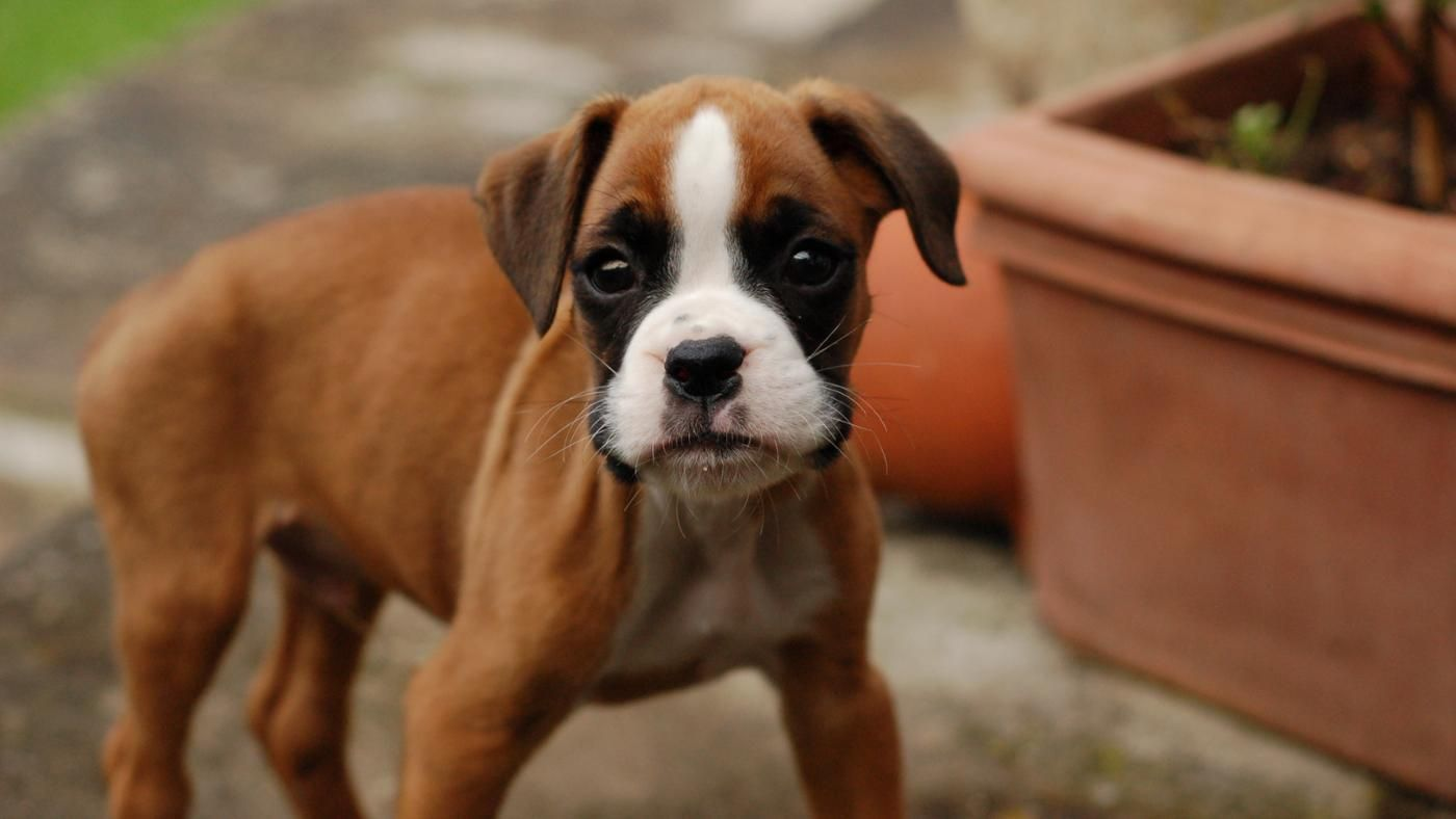 How To Stop Your Puppy Crying When They Re Alone Dogdogs Hund Zubehor Hunde